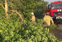 В Новоодесском районе спасатели убрали деревья, которые упали на проезжую часть из-за шквального ветра (Фото)