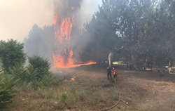 В Новой Одессе из-за человеческой халатности горели лесные массивы (Фото)